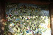 伊瓜苏鸟园这里有许多珍稀的鸟类,尤其是五彩斑斓的金刚大鹰,还会学人说话,真的是非常的有意思。