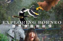 打开不一样的马来西亚-婆罗洲探险记 婆罗洲(Borneo)让马来西亚充满了诱惑和魅力。对我而言,比起
