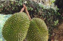 来马来西亚吃榴莲样子不太好看......自己参详参详