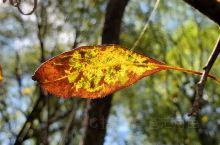 牙克石的秋天到了,秋天的景色是最美的