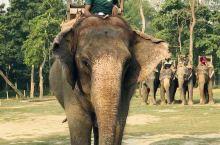 奇特旺国家公园,是尼泊尔的国家公园,全称皇家奇特旺国家公园。因独角犀牛著名,它是世界上濒于灭种的动物