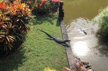 解锁轻松遛娃目的地之巴厘岛篇 期待了大半年的巴厘岛之行真的超级惊喜,推荐给对海岛游感兴趣,又不想出国