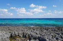 坎昆的飞鱼海滩是一处景色非常优美的原始海滩,海滩上有着茂密的原生植物,这里之所以叫飞鱼海滩,因为在海