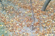 落叶对比绿叶