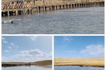 """深秋季节,巴音布鲁克天鹅湖中大部分天鹅都飞到南方越冬去了,留在这里是收容的""""老弱病残""""。但是这些天鹅"""