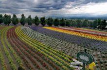 日本北海道富良野旅游必到薰衣草花田的富田农场打卡攻略 作为一名到亚洲日本北海道旭川旅游的普通游客,可
