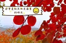 北京房山坡峰岭  秋天该很好 你若尚在场~北京最美的秋天悄无声息的来啦 房山坡峰岭红叶今日开始慢慢进