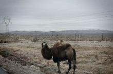 喜欢沙丘,喜欢大漠的空旷