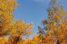 金秋十月是欣赏胡杨的最佳季节,避开了国庆黄金周的人满为患,徜徉在绿色,黄色,金黄色交织的胡杨林中,随