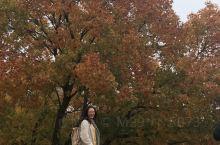 有客东来见故乡  聚于乌旦枫林旁 君子相交二十载  推心置腹诉衷肠 枫姿栎影成印证  红叶初心两不忘