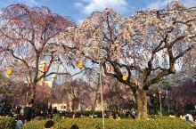 看看樱花的季节