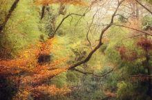 #莫干山风景区##住在老别墅里# 天气预报上,接下来的天气不是配套,不是阴便是雨,但又有什么关系呢,