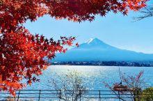 富士山与红叶 日本·亚洲