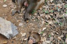 来桂林参加一个会议,住在七星公园附近,下午买票去逛了逛!没想到上山后发现猴子群,好多小猴子特别特别的
