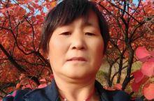 累了!你就来歇歇脚吧!河南渑池县的红叶已经成为当地旅游资源中得天独厚的天然优势,每年10月左右红叶崭