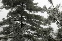 初冬老君山-雪中游老君山3:从金顶道观群下山途中,风雪渐小,把背了一路的相机拿出来拍了一些雪景和树挂