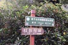 莫干山徒步行,在森林野道上,穿竹林,翻野坡,虽然有点折腾,但还乐在其中,登上山峰,登高而望 ,云海景