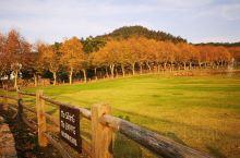 莫干山的秋,云淡风轻,天宇澄朗,银杏树金灿灿令人赏心悦目。 可以在这里骑行,享受短暂飞行的快乐;可以