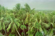 文昌·海南#82版西游记取景地#  在海南文昌与琼海的交界处 又一个小镇 椰林摇曳 海风吹过 有家名