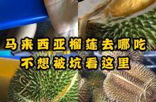 马来西亚选择榴莲的秘诀攻略