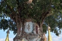 芒市树包塔是用石头砌成,高约十余米,呈八角形,神龛内竖着佛像。砖砌的塔身天长日久出现了裂缝,风中渐渐
