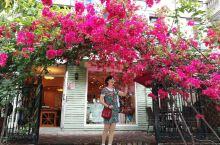第一次来三亚被这的鲜花美景吸引了!