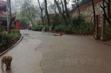 弘福寺位于黔灵山, 贵阳·贵州  ,这里可爱的猴子与寺庙共存,山间小路,寺庙门口皆是,来喂食吧!人与