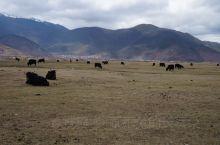 香格里拉,属于迪庆藏族自治州,海拔超过3000米,这里生活的绝大多数都是藏民,建筑都具有藏式风格,这