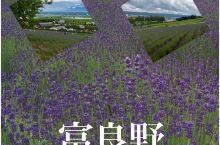夏天的北海道,富良野漫山遍野的薰衣草把大地染成了一片紫色,雨后的天空密云低垂,辽阔起伏的原野生机勃勃