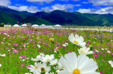 香格里拉の四季歌——春天  春月,我说我要旅行,去那个神秘而美丽至极的地方。香格里拉一直是我心中的