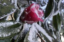 大雪过后的天鹅堡森林公园