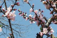 春意盎然———桃色真的很美