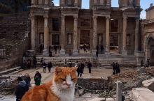 伊斯坦布尔的猫。伊斯坦布尔(原名君士坦丁堡)是土耳其经济、文化、交通中心,世界著名的旅游胜地,繁华的