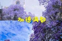 尼泊尔旅行 | 蓝花楹盛开,加德满都一片紫海  加德满都,色彩缤纷的众神之都,四季如春的山中天堂,红