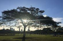 布里斯班市区植物园是一座非常大的绿洲,它位于墨尔本的市中心,这里是整个繁华都市中的绿洲。有着各式各样