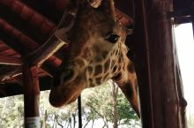 Giraffe center, 自己打车就可以了,九点开门,门票1500,只能刷卡。出行较方便。适合