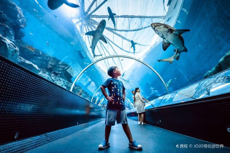 S.E.A. Aquarium4