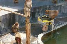 植物园的猴子12月才开始泡温泉,现在只会拍手要零食,有点失望。不过植物很美。