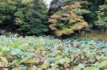 冈山的后乐园!日本三大名园之一!