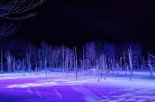 亮点特色: 美瑛青池的点灯和白金温泉瀑布的点灯夜景 太让人感动了 动物园一日游 各种小可爱 完美被治