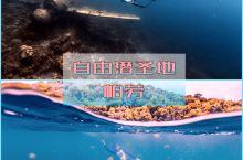 【面の旅行】自由潜的圣地,上帝的水族箱帕劳 帕劳绝对是面面去过最适合潜水的地方,不论是水肺潜水还是自