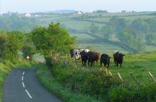 爱尔兰最北部的县