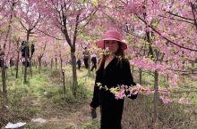 在樱花盛开的季节