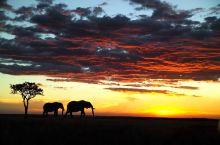 奇幻非洲,野生动物狂欢季
