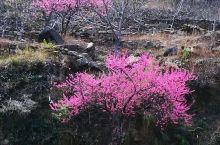 满树和娇烂漫红,万枝丹彩灼春融。