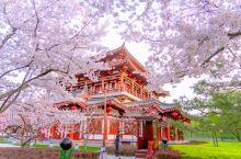 春天随着气温的升高,万物复苏百花争艳,走进西安大唐芙蓉园花开柳绿,满园春色与唐风古韵的建筑融合在一起