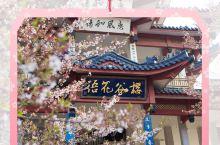 # 太湖佳绝处 , 无锡  鼋头渚 |来一场和三万株樱花的约会吧? 简介 鼋(yuán)头渚位于江苏