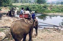 清迈大象营还是非常值得一去,特别是...