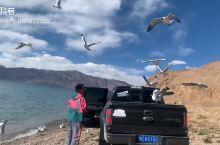 中印边境湖:班公湖。湖边的海鸥软糯可人,你有吃的它就跟你好,美好的小透明,美好的下午。小哥哥应该不会