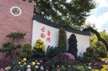 南通市第28届菊花展,市花展,吸引众多市民的捧场,也有一定历史了。